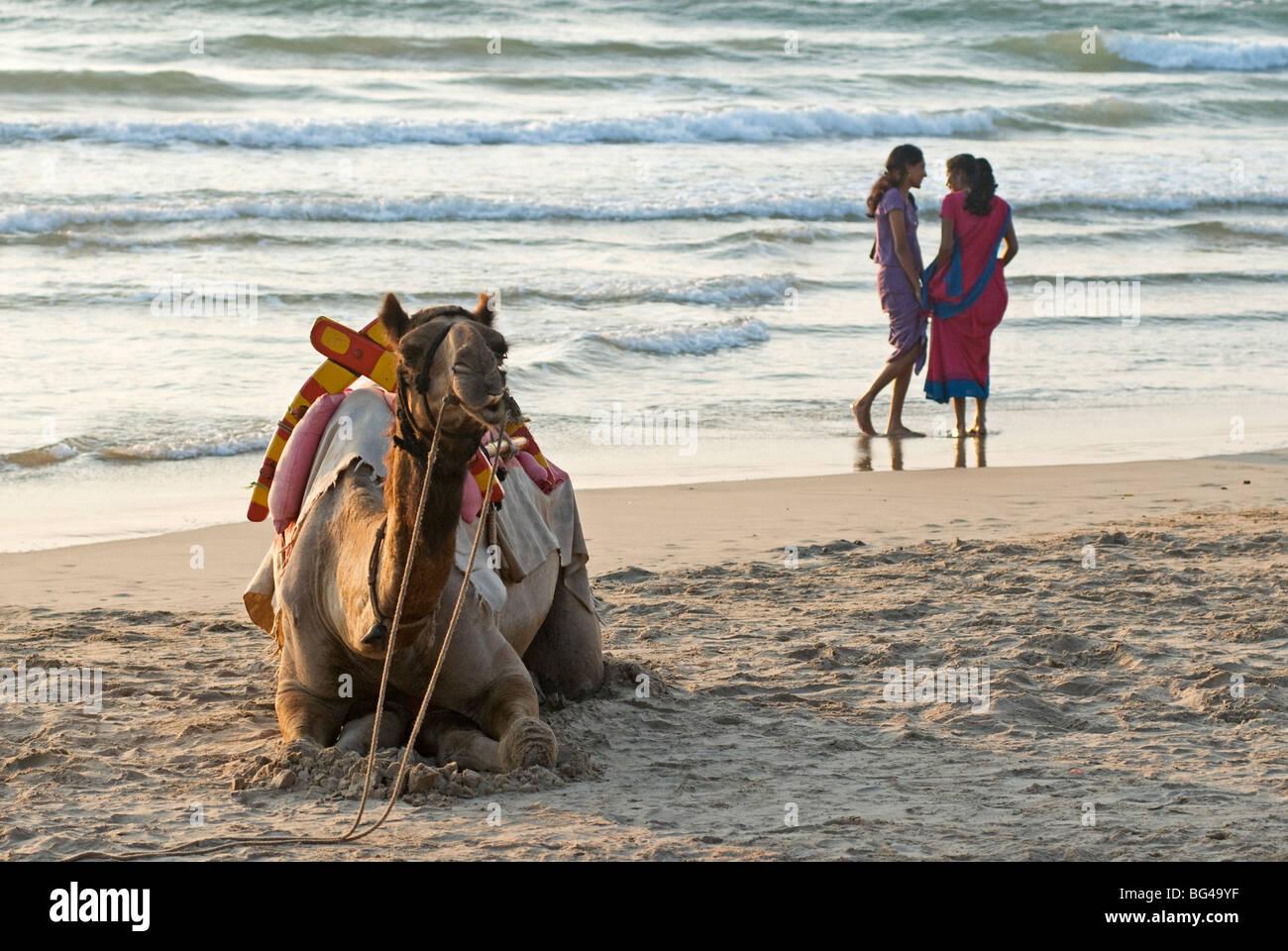 Two girls on beach at dusk, camel waiting, Ganpatipule, Karnataka, India, Asia - Stock Image