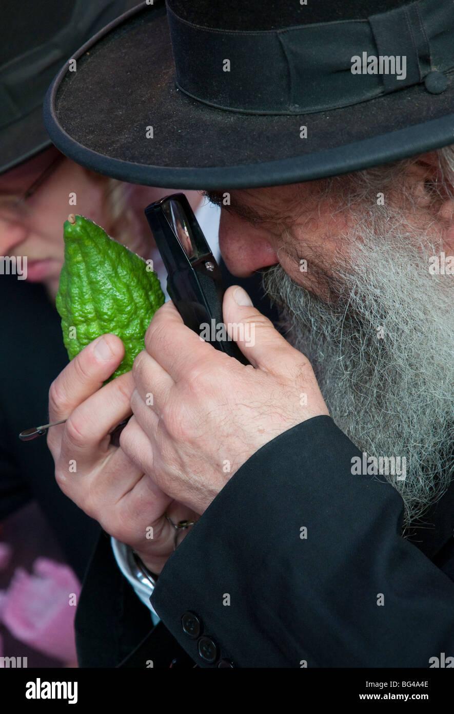 orthodox jew checking citrus etrog for the sukkot celebrations - Stock Image