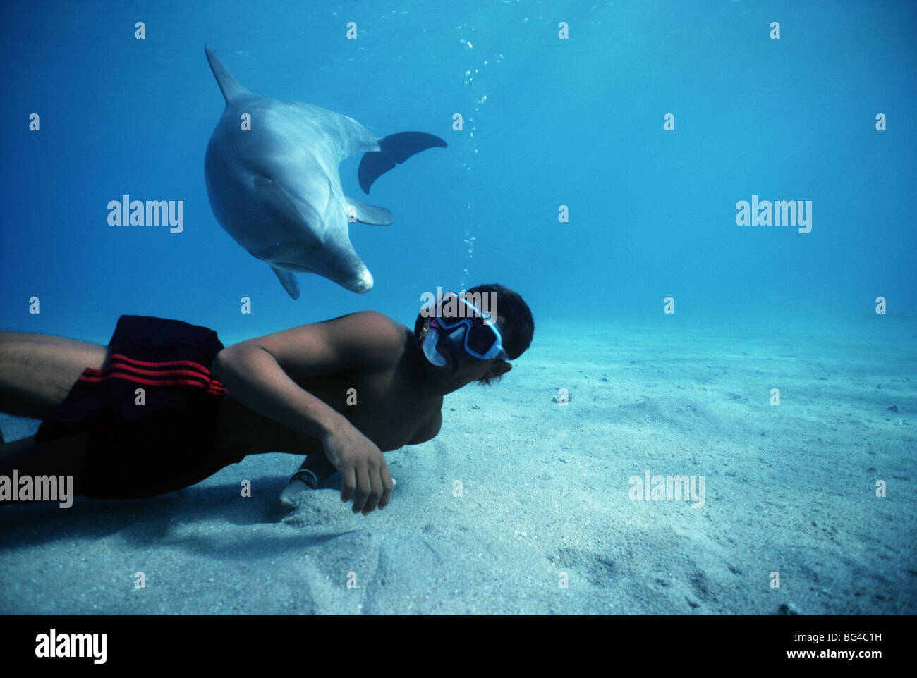 Snorkeling with Bottlenose Dolphin (Tursiops truncatus), Nuweiba, Egypt - Red Sea. - Stock Image