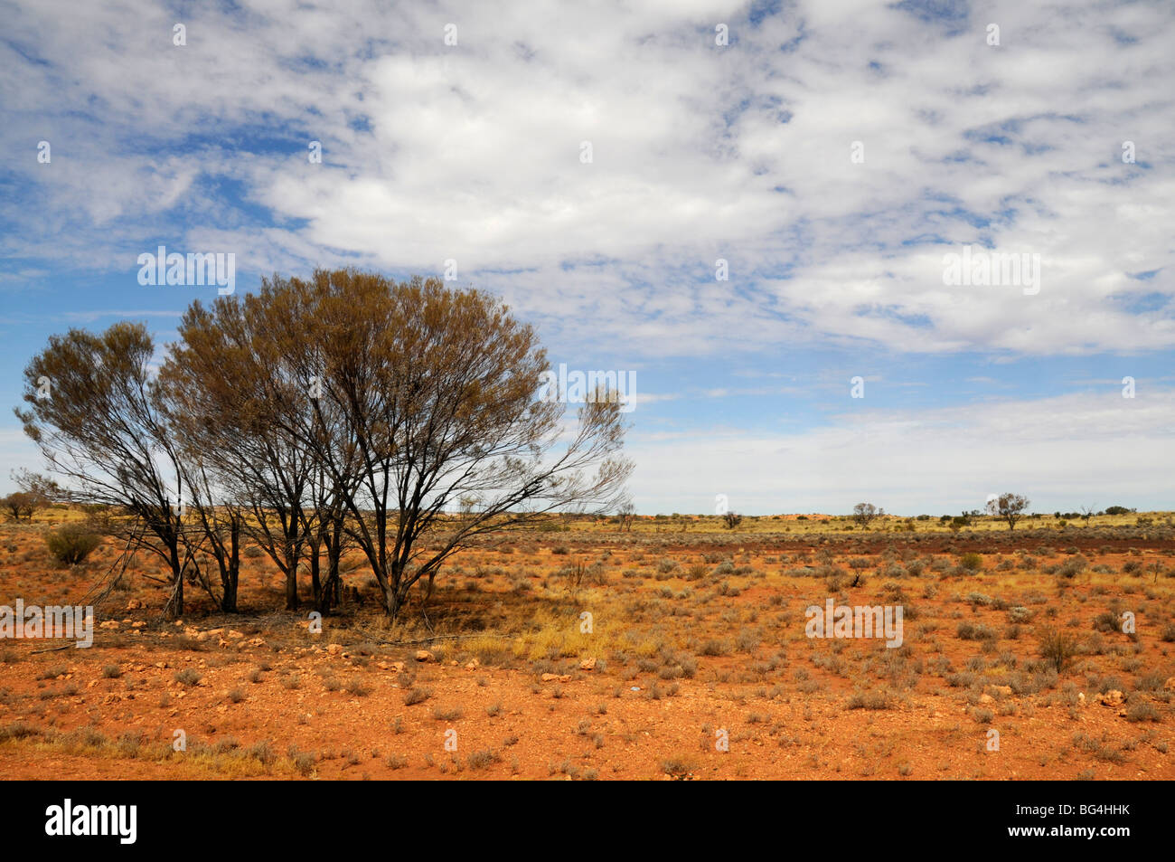 Part of the red desert with wild shrub and trees  in the Northern Territory of Australia - Stock Image