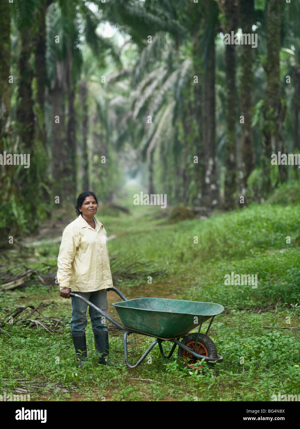 A portrait of a farm worker on a palm tree plantation with a wheelbarrow in tow. - Stock Image