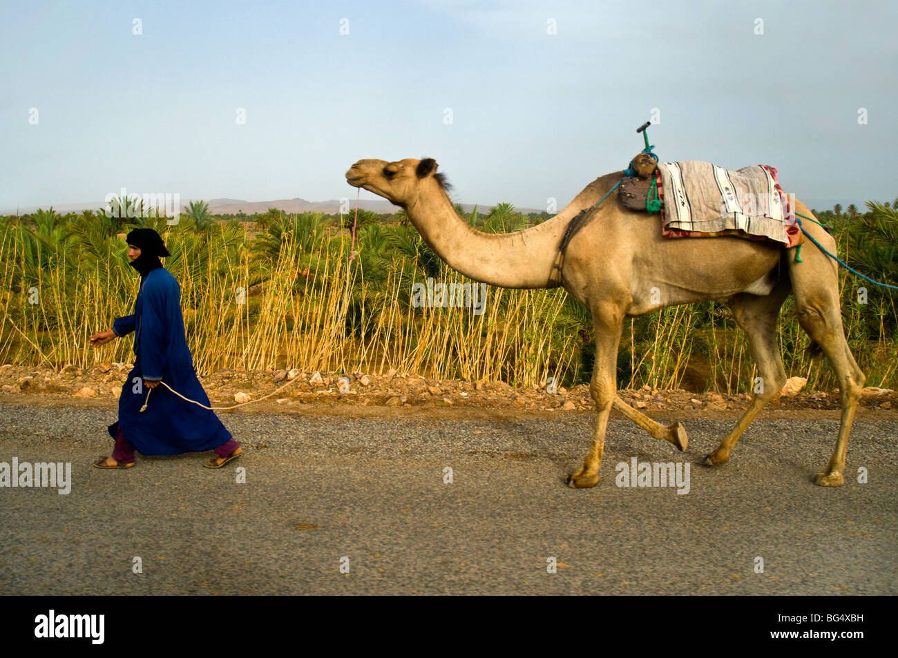 Berber Man leading camel along a road in Morocco, North Africa - Stock Image