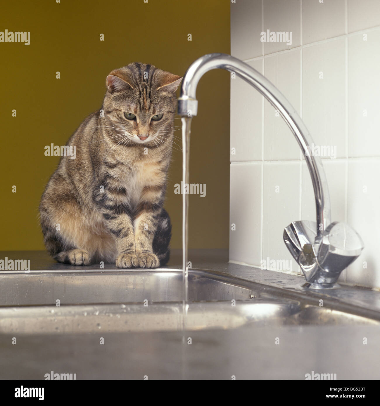 Tabby cat looking at the water tap - Stock Image