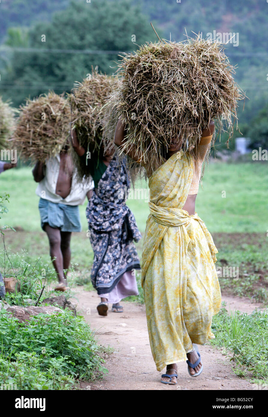 Women carry hay on their heads, Tamil Nadu, India - Stock Image