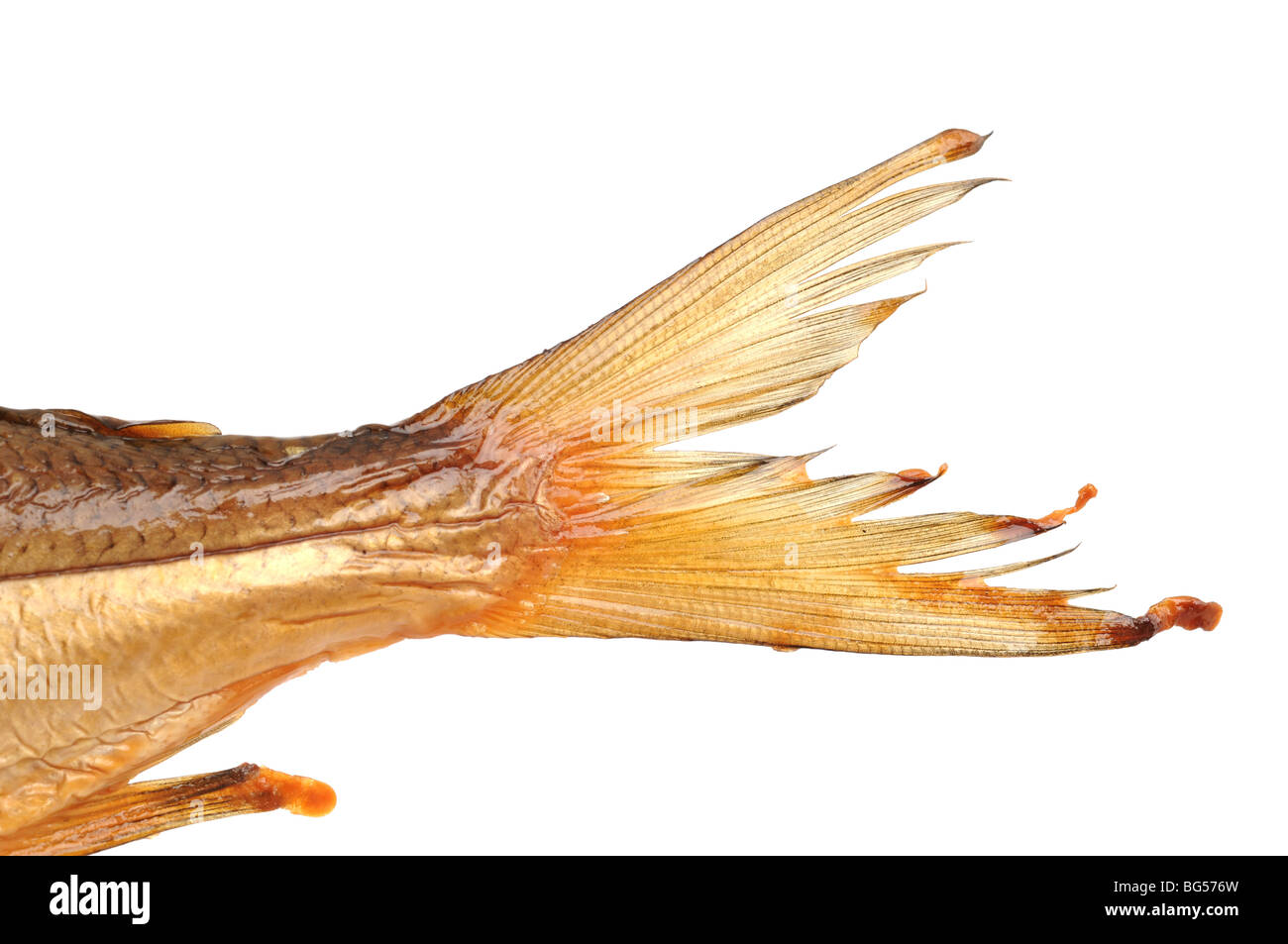 Tail of a smoked whitefish from the Bavarian Chiemsee - Stock Image