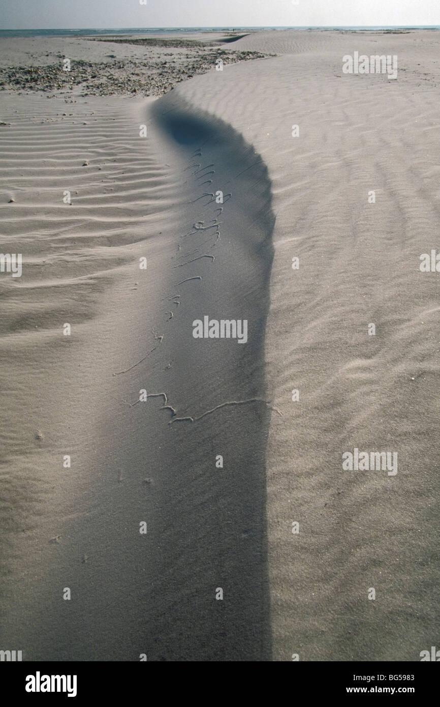 Coastal sand dune on wide beach - Stock Image