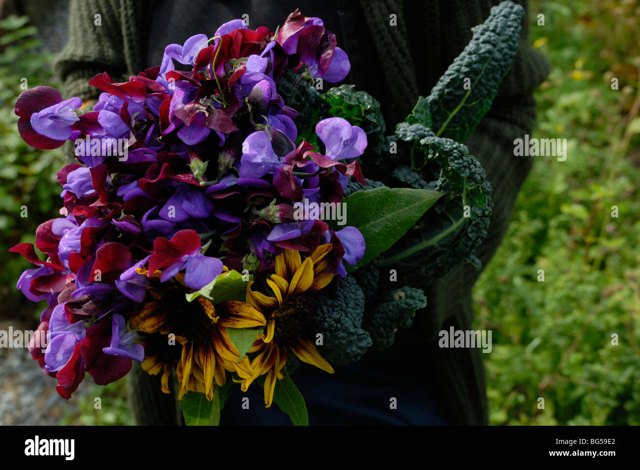 A bunch of Sweet Pea 'Matacuna', Sunflower 'Ring of Fire' and Kale, 'Nero di Toscana'. - Stock Image