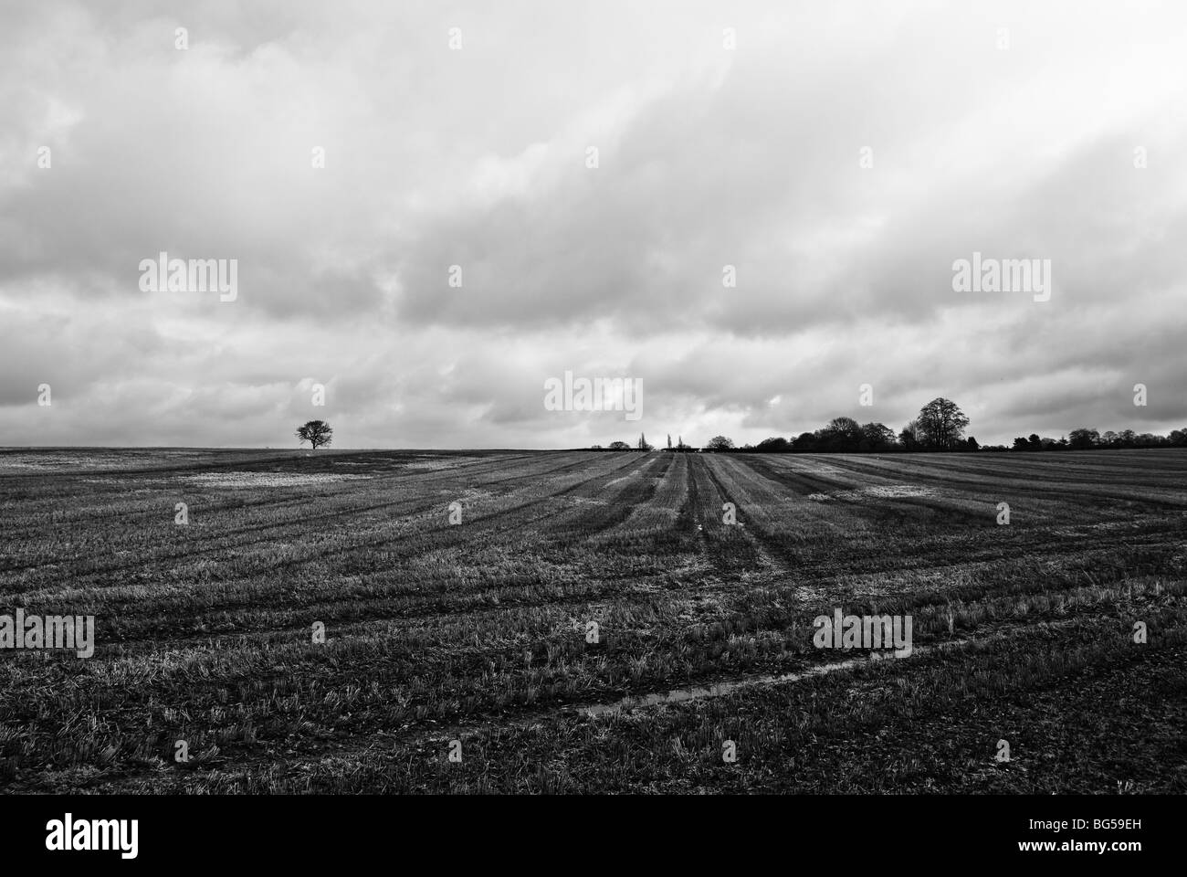 Expanse of field - Stock Image