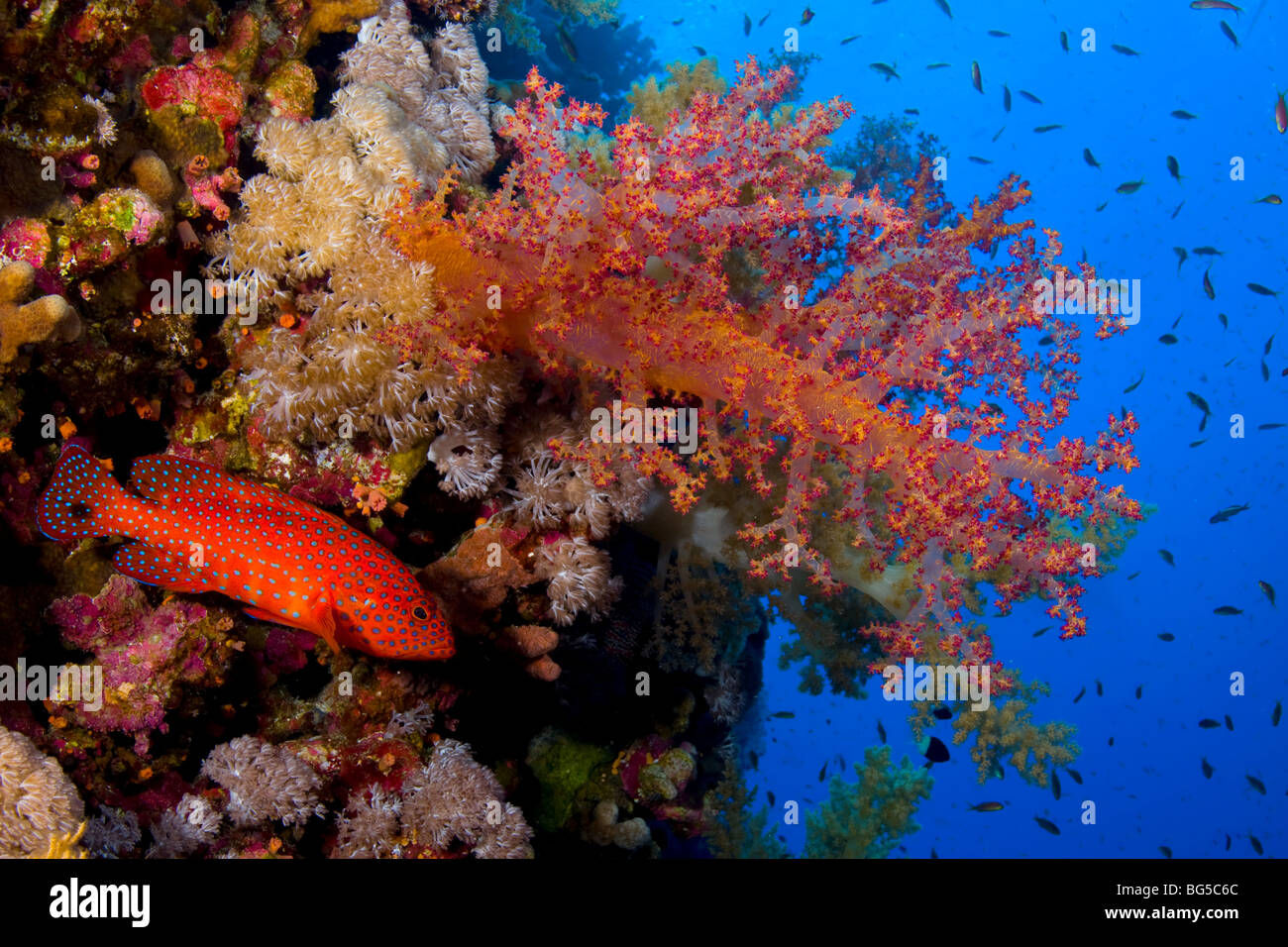 Colorful Reefscape With Fish Stock Photos & Colorful Reefscape With ...