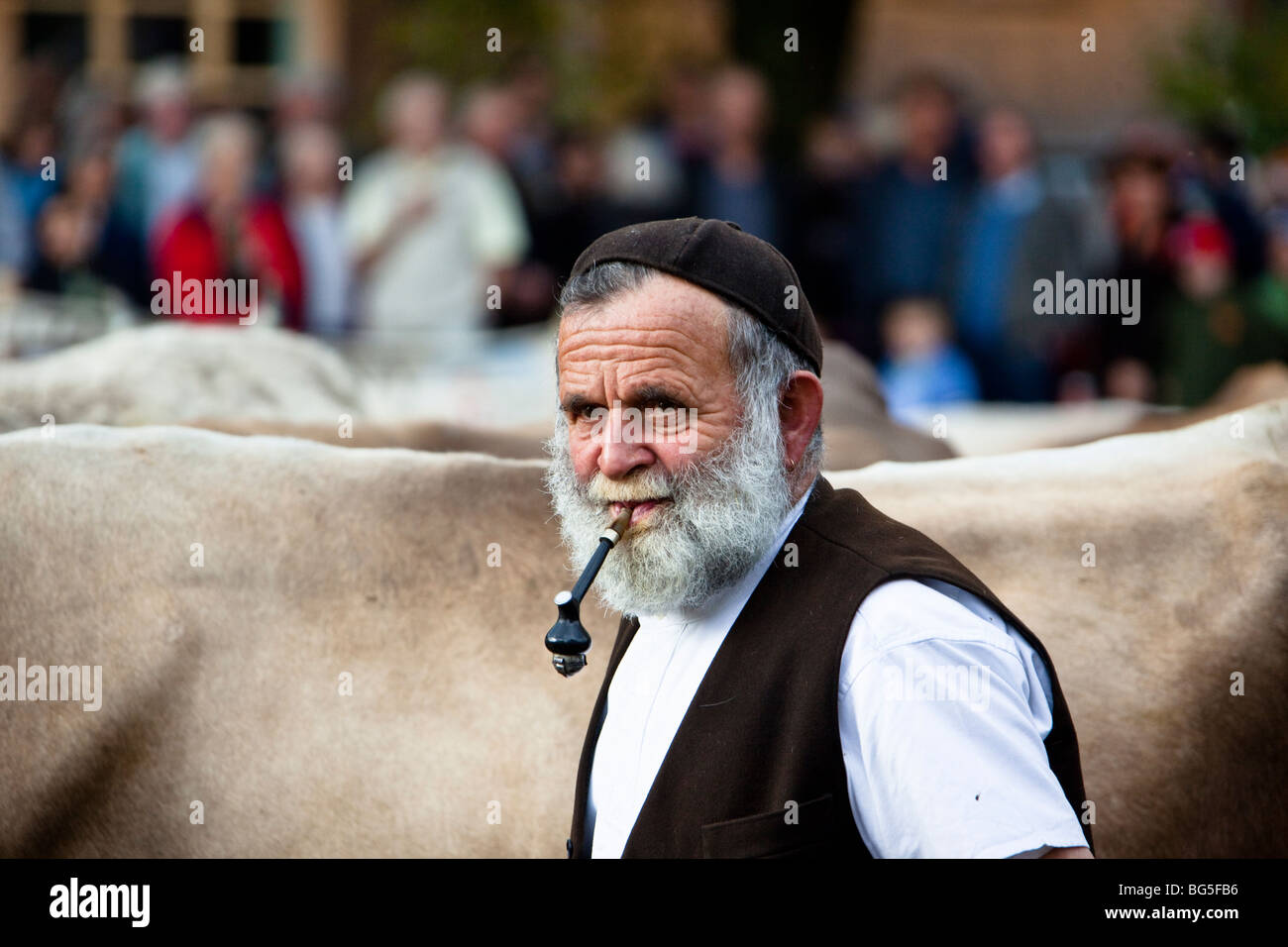 old farmer in flat cap smoking pipe Crymych sheep market Pembrokeshire  wales UK. A77BXP (RM). Senior Farmer smoking pipe at Autumn cattle show in  Appenzell ... 586389402cb5