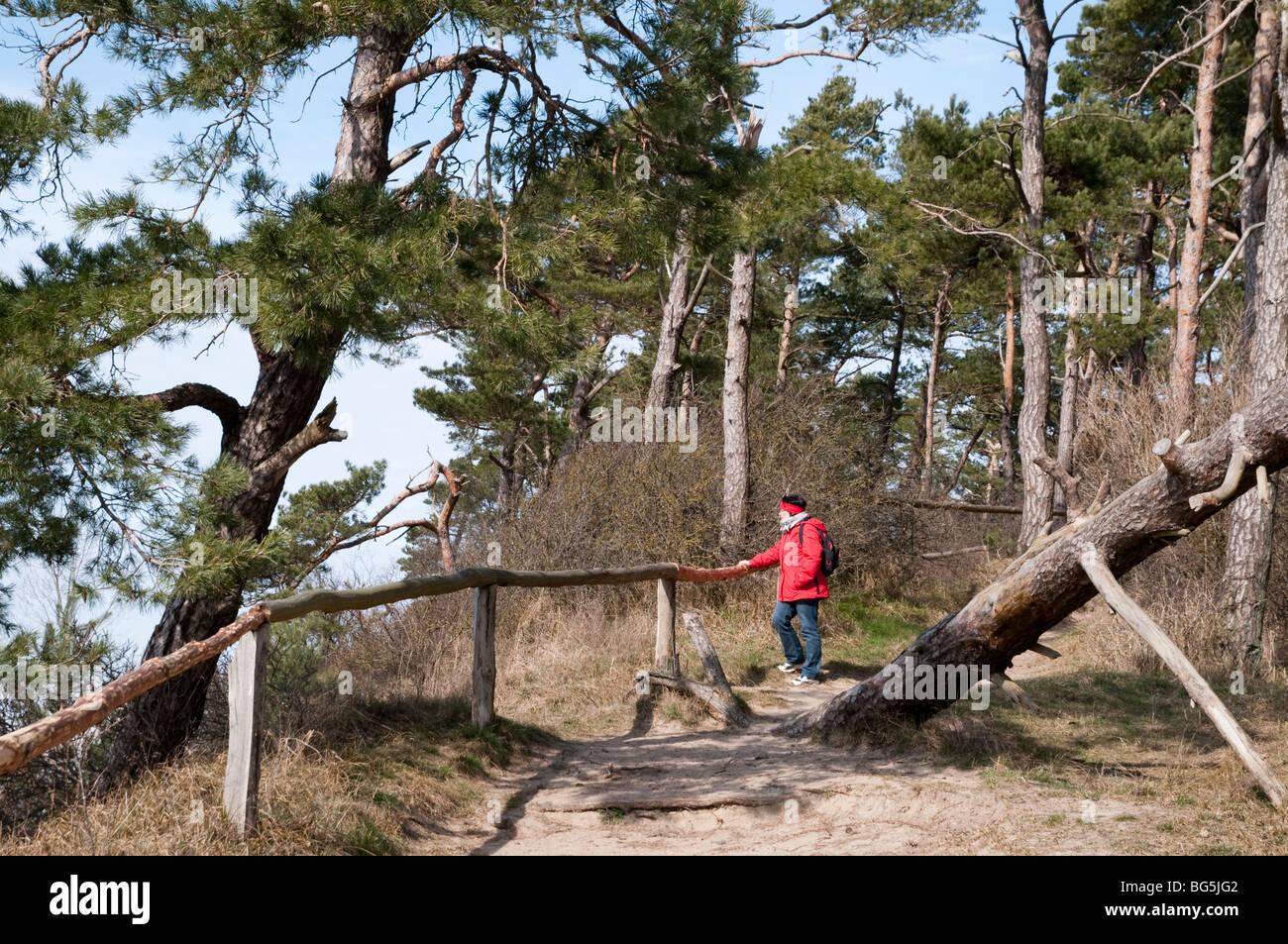 Naturschutzgebiet Halbinsel Gnitz, Insel Usedom, Mecklenburg-Vorpommern, Deutschland | nature reserve Gnitz, Isle - Stock Image