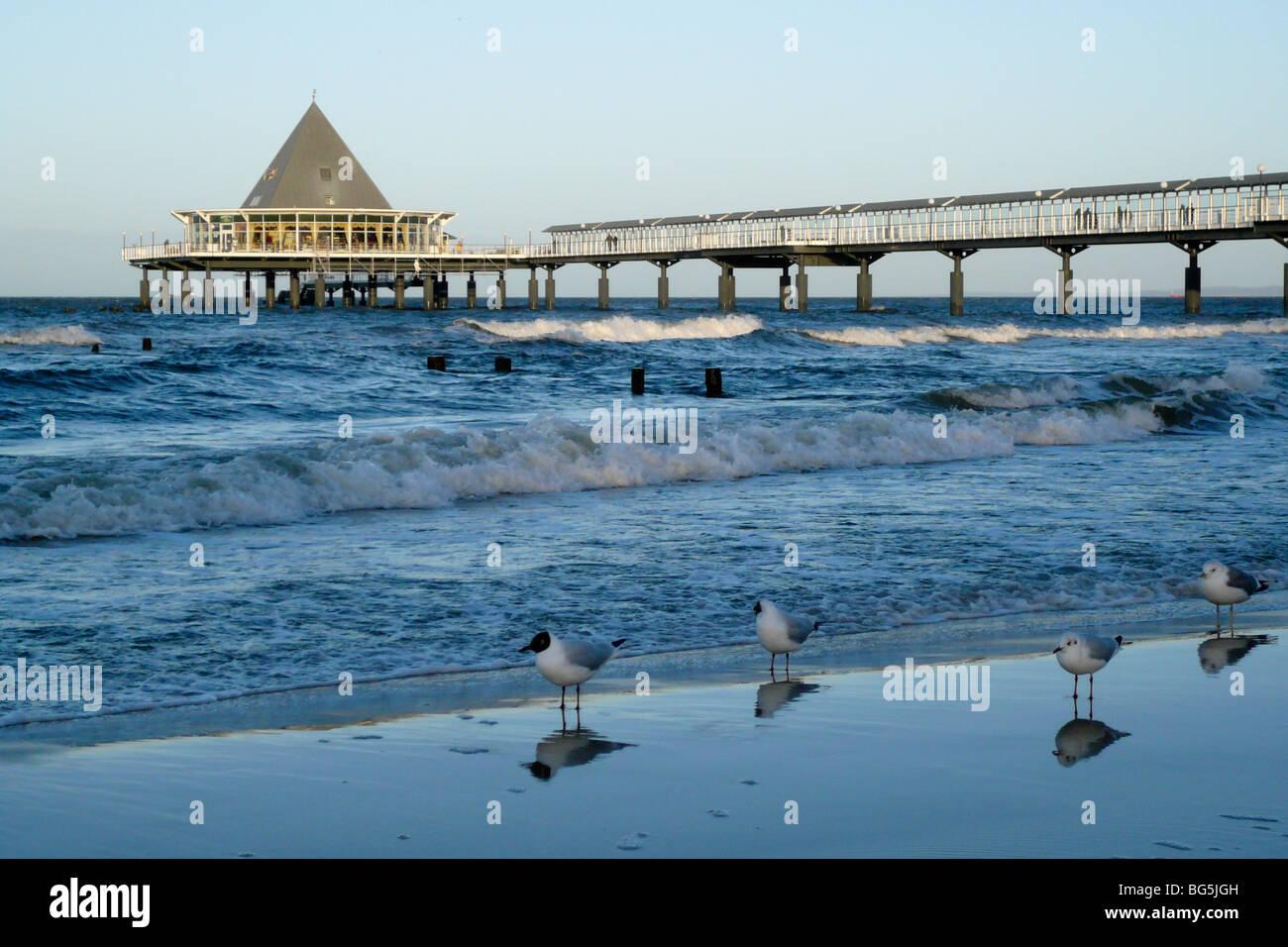 Seebrücke, Strand, Möven, Heringsdorf, Insel Usedom, Mecklenburg-Vorpommern, Deutschland | Pier, beach, - Stock Image