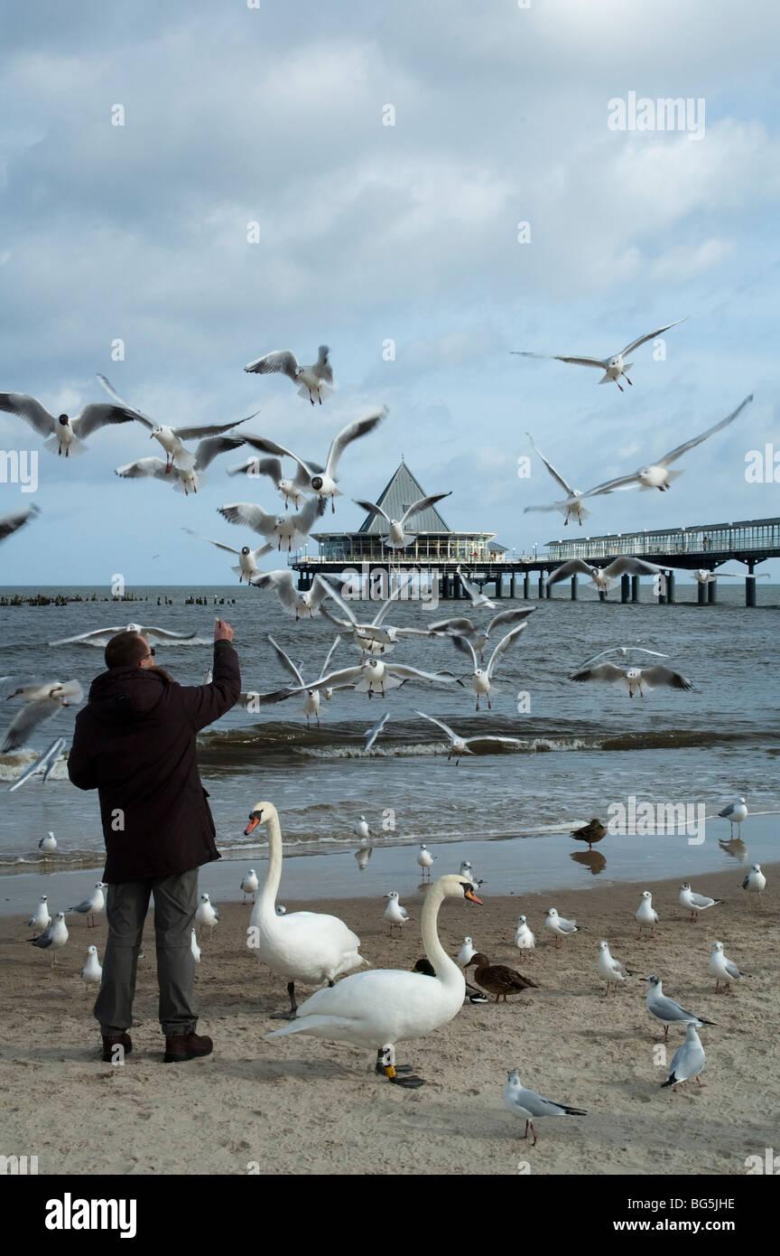 Seebrücke, Strand, Schwäne, Mann füttert Möven, Heringsdorf, Insel Usedom, Mecklenburg-Vorpommern, Deutschland   Stock Photo