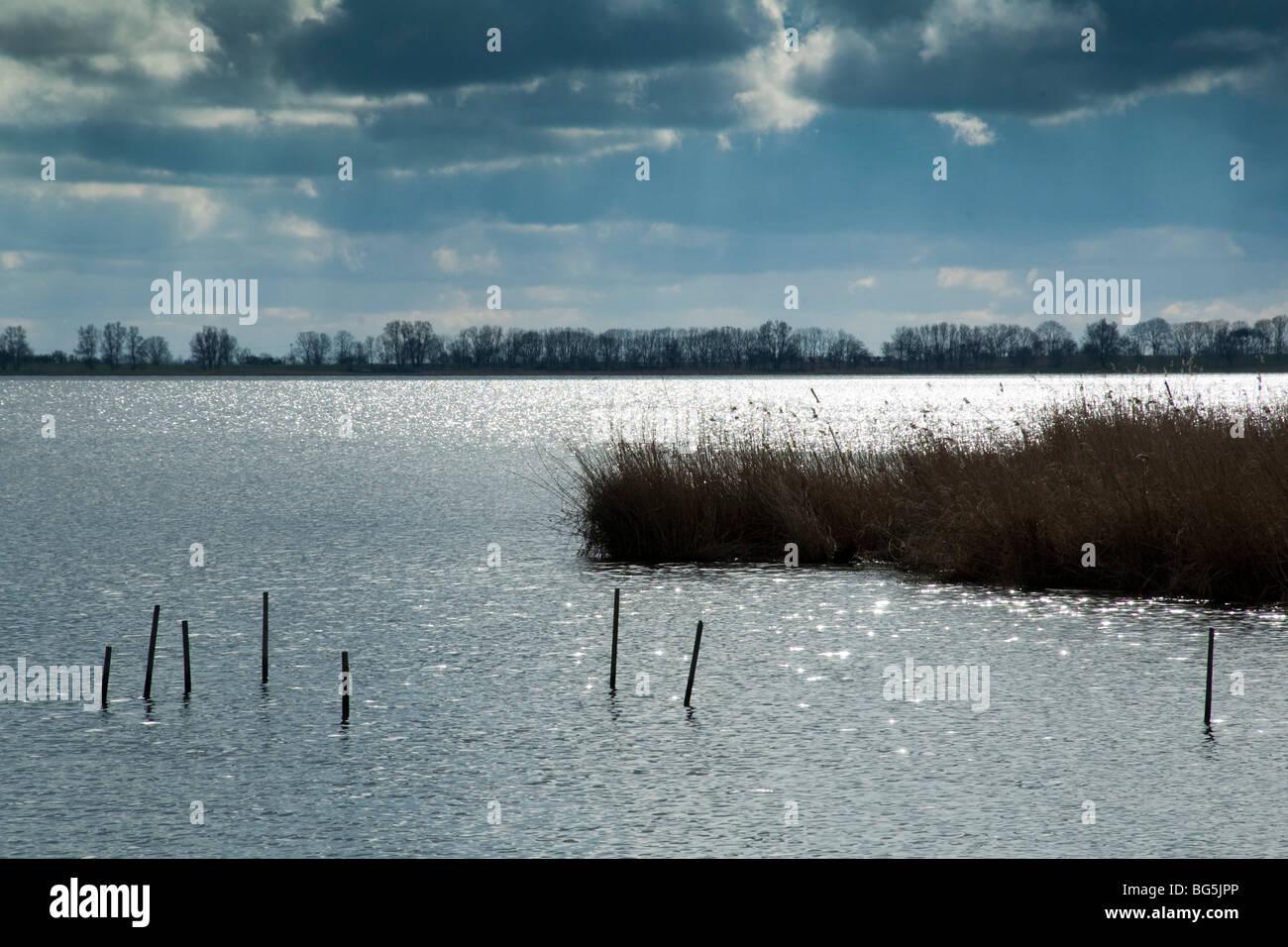 Achterwasser, Usedomer See, Schilf, Insel Usedom, Mecklenburg-Vorpommern, Deutschland | Achterwasser, Usedomer See, - Stock Image