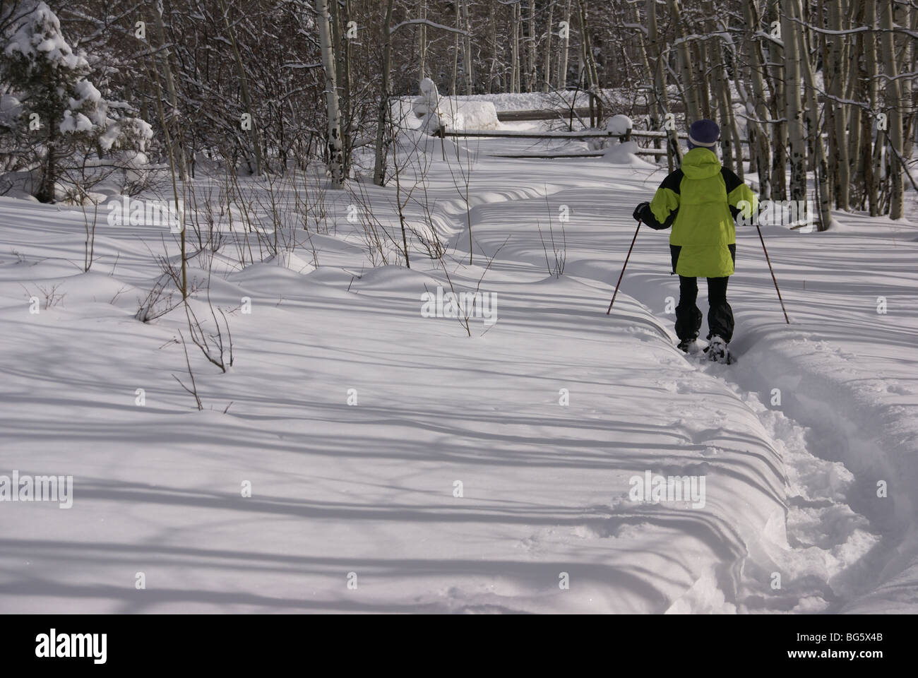 Yellow parka snow shoe hiker, on winter trail with bare aspens, Cordillera, Colorado, Rocky Mountains - Stock Image