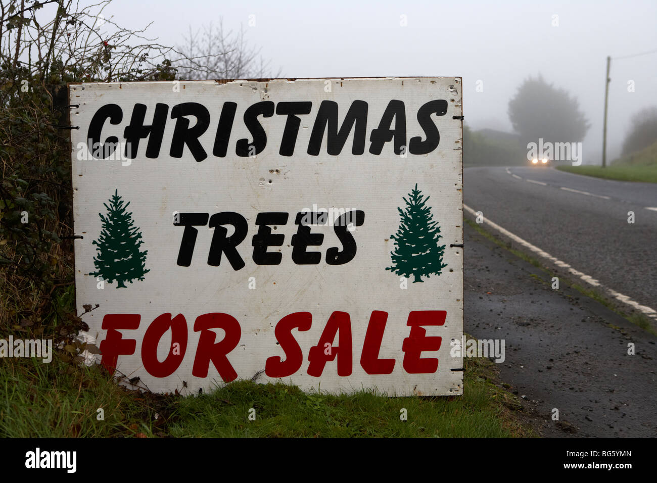 christmas trees for sale sign on the roadside county fermanagh northern ireland uk - Stock Image