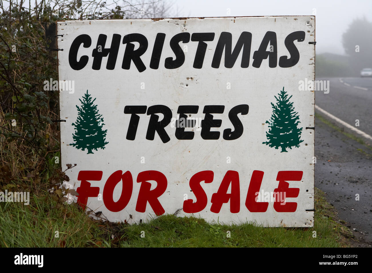 christmas trees for sale sign on the roadside county ...