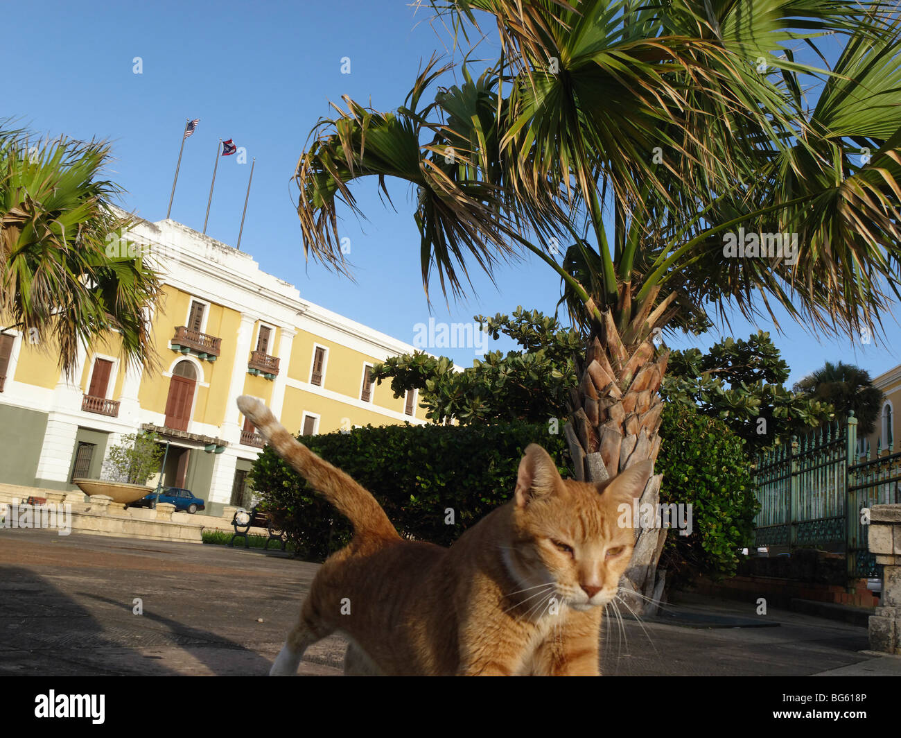 Low Angle View of a Cat Walking on a Street, Old San Juan, Puerto Rico - Stock Image