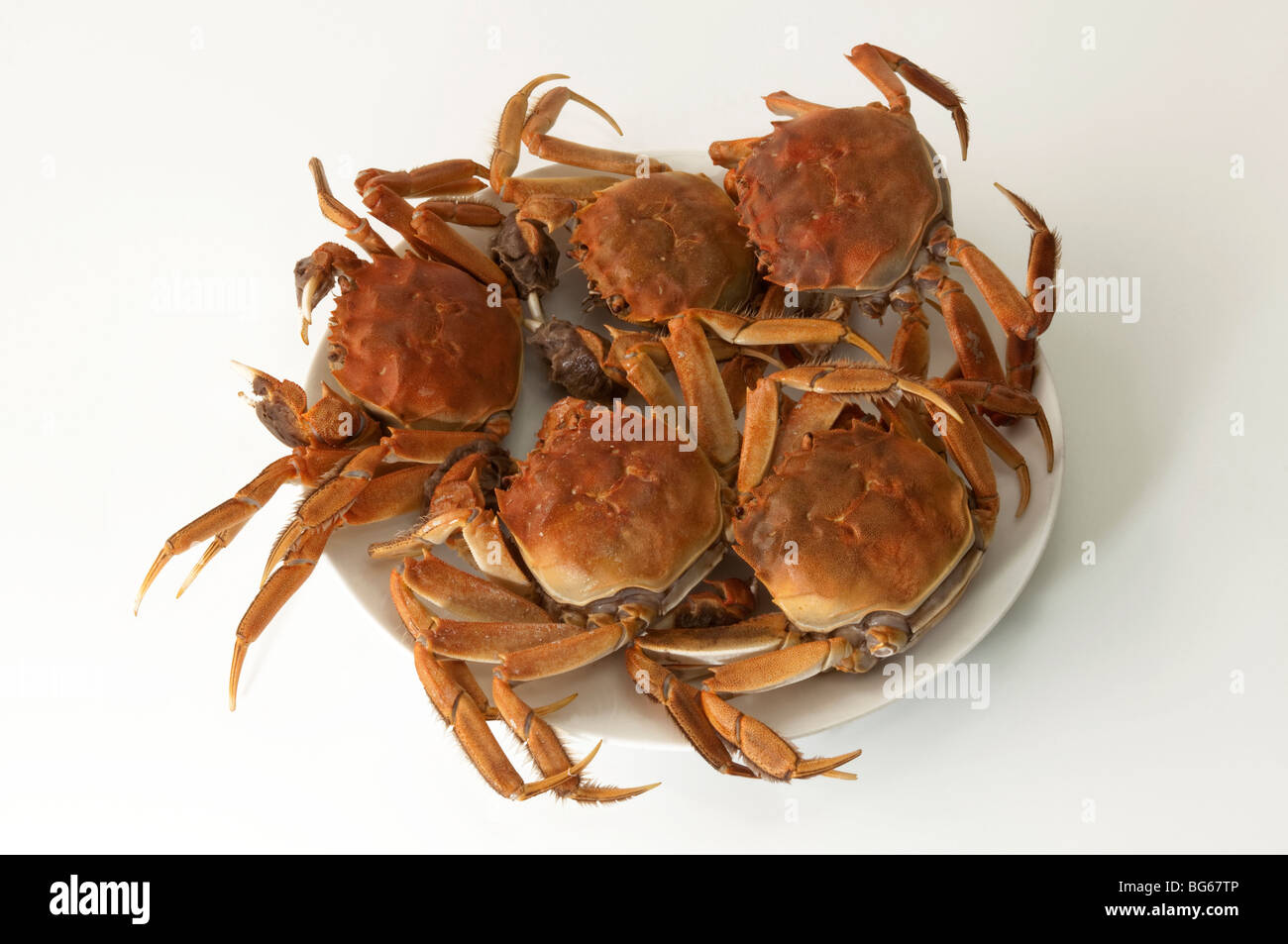 Chinese Mitten Crab (Eriocheir sinensis), cooked specimens. The crabs are a famous delicacy in Shanghai cuisine. - Stock Image