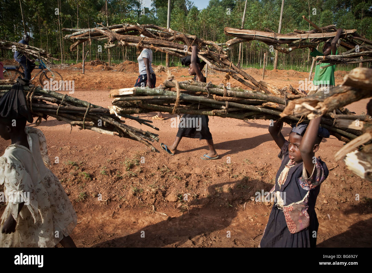 Children carry firewood down a road leading out of the Kakamega Forest Reserve in Western Kenya. - Stock Image