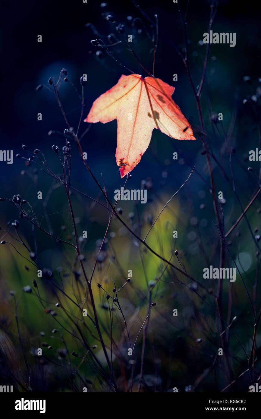 The last leaf - Stock Image