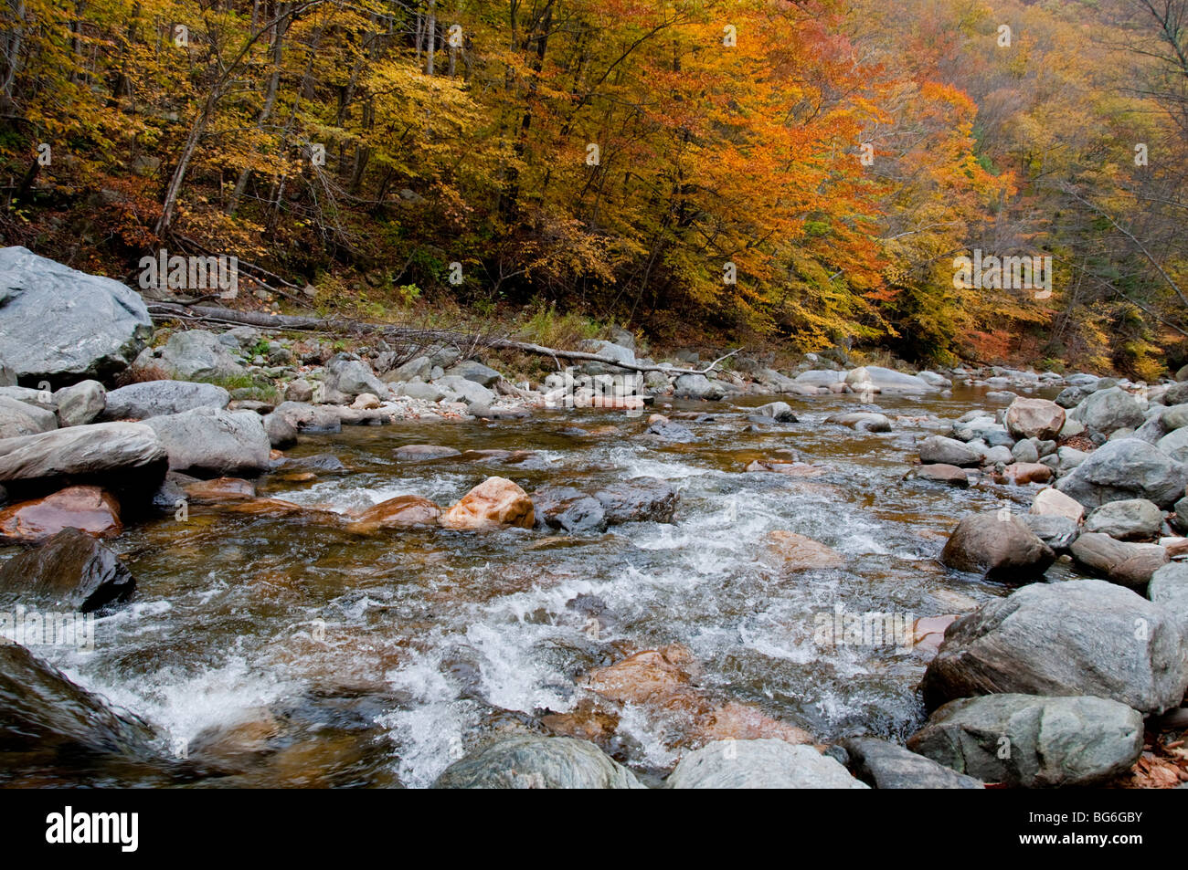 River Deerfield, Mohawk, Trail, Autumn Colours, Colors, Ash, Beach,Full Autumn Foliage. Massachusetts,USA Stock Photo