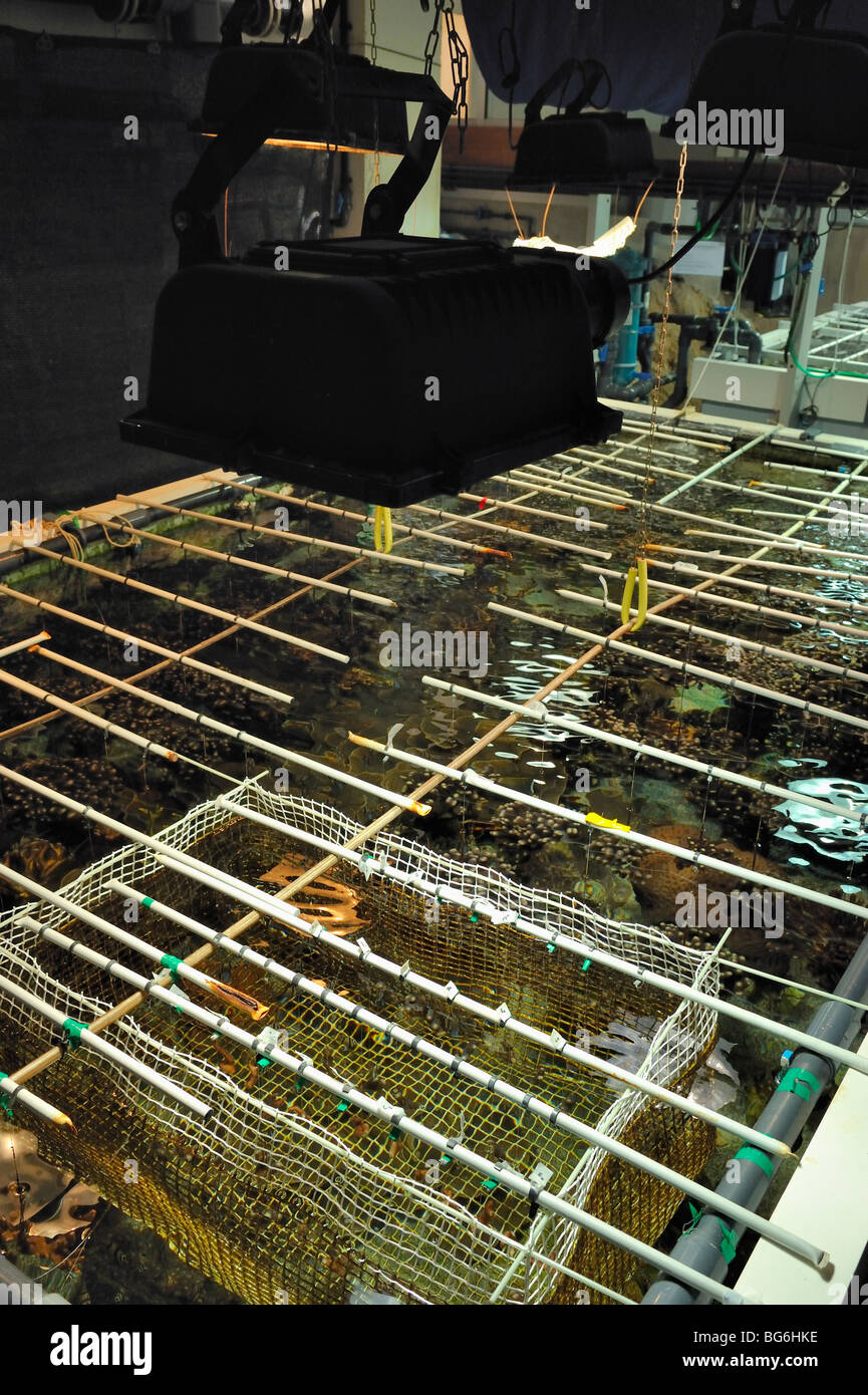 Big nursery tank for coral in the aquarium of Monaco Stock Photo