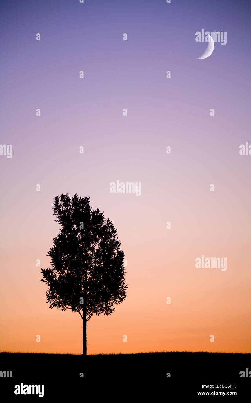 Lonely tree at sunset - Stock Image