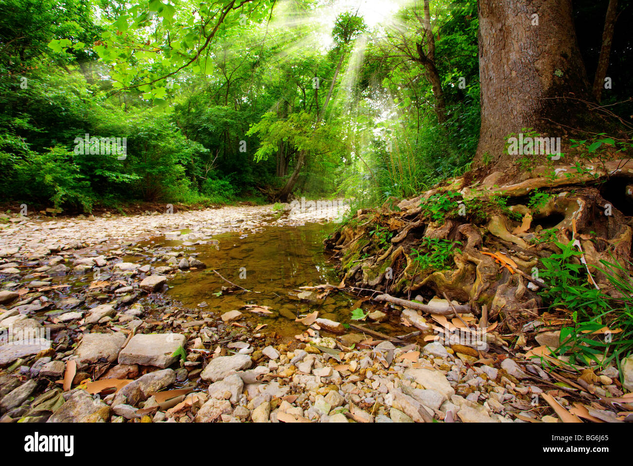 Creek in the forest - Stock Image