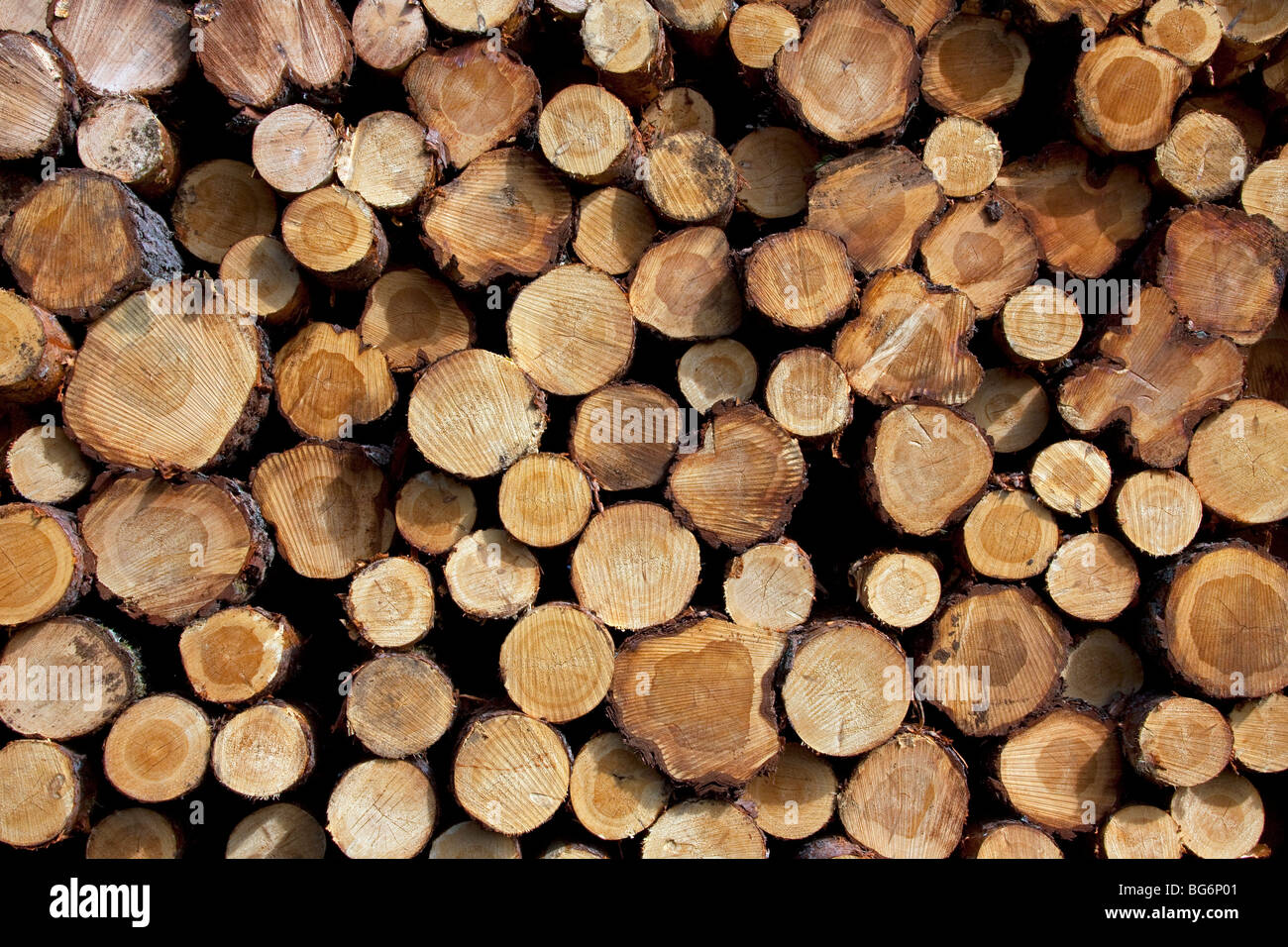 Logging industry showing pile of cut logs / trees / timber from pine forest - Stock Image