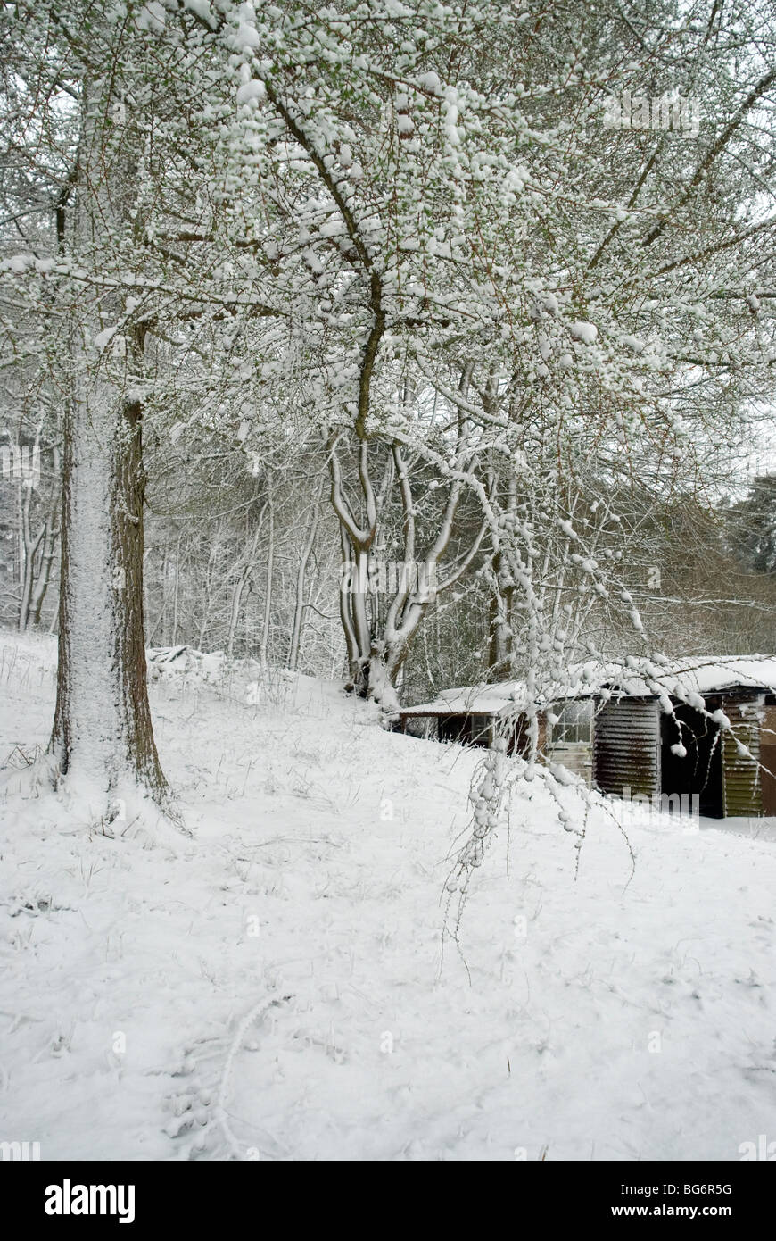 Portrait view of woodland with stables after fresh snow - Stock Image