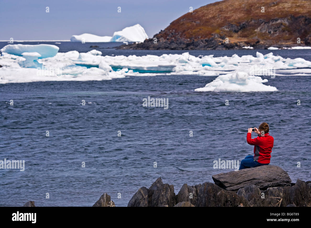 Woman iceberg watching from the shore in the town of Quirpon with pack ice in the harbour, Trails to the Vikings, Stock Photo
