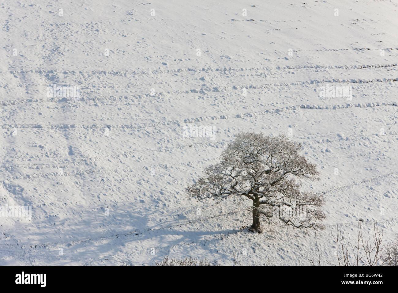 Winter tree & snow, Gloucestershire, UK - Stock Image