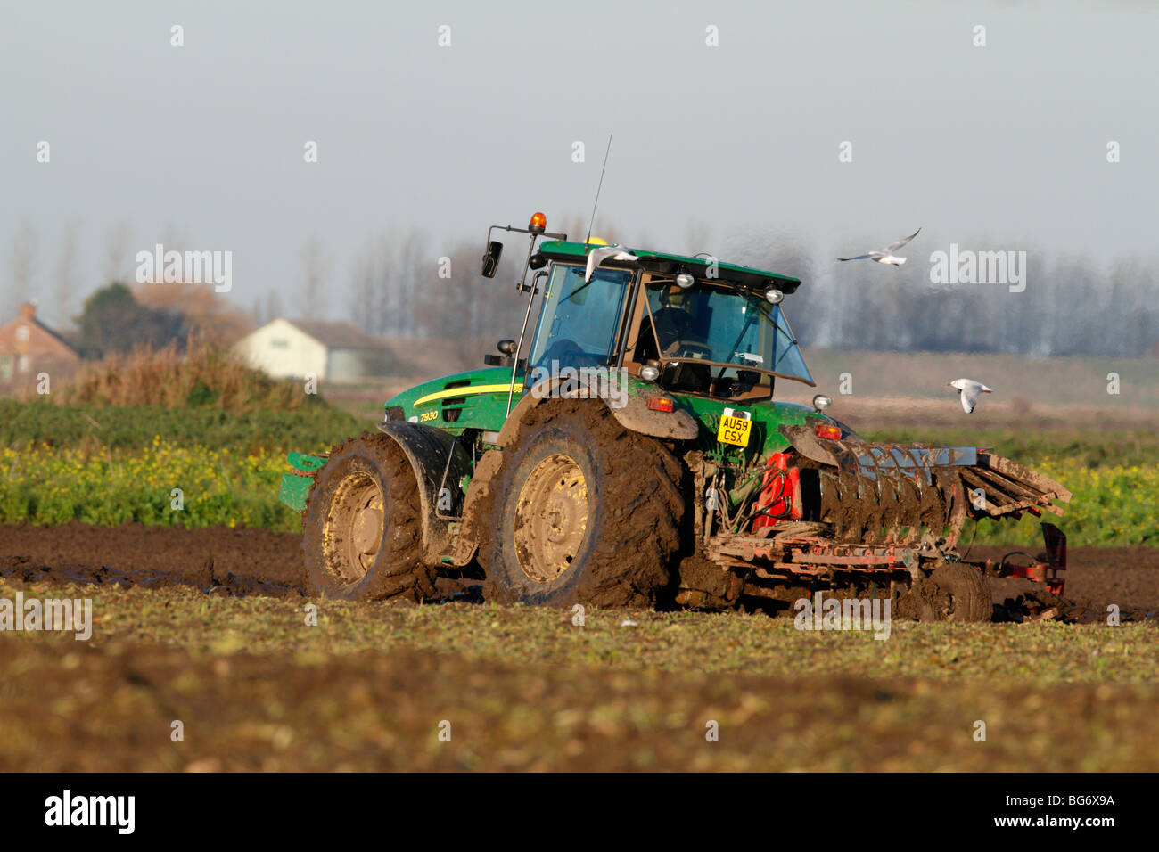 Tractor ploughing with gulls cultivation - Stock Image