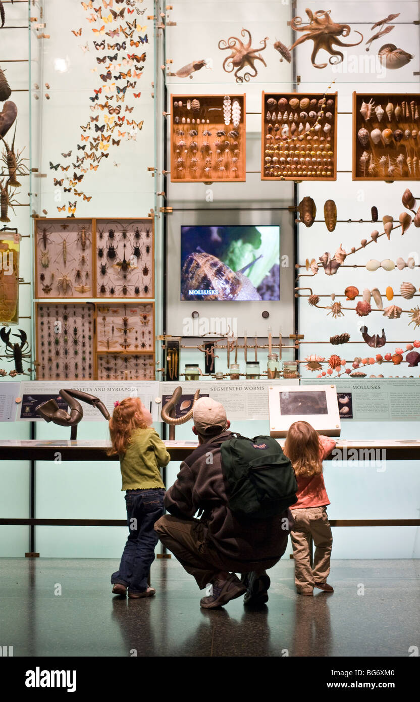 Man and his two daughters at the Hall of Biodiversity at the American Museum of Natural History in New York CIty - Stock Image