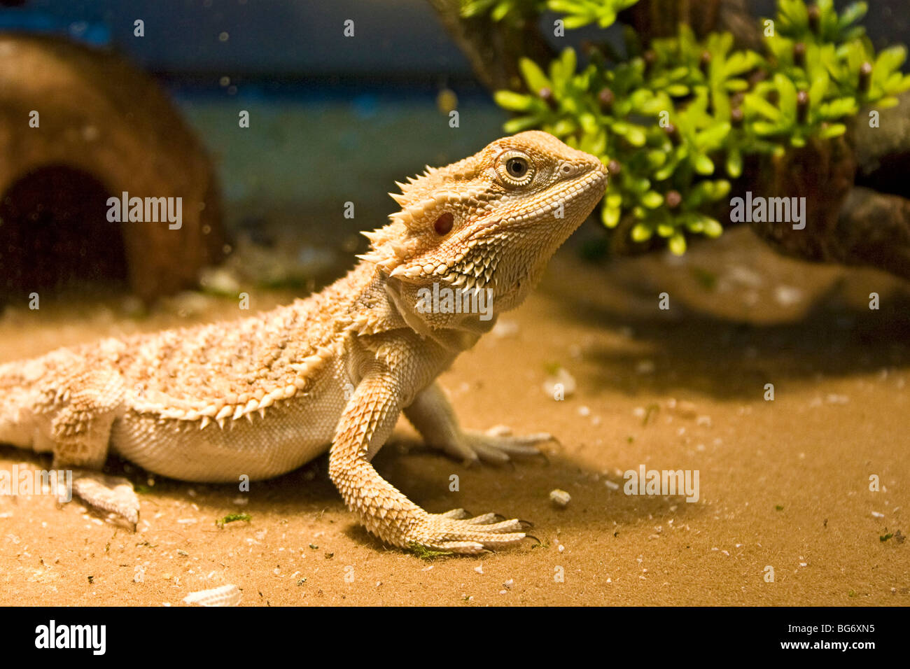 Reptile Room Large Size Of Lizard Tank Simple Created From Nothing O Bearded Dragon