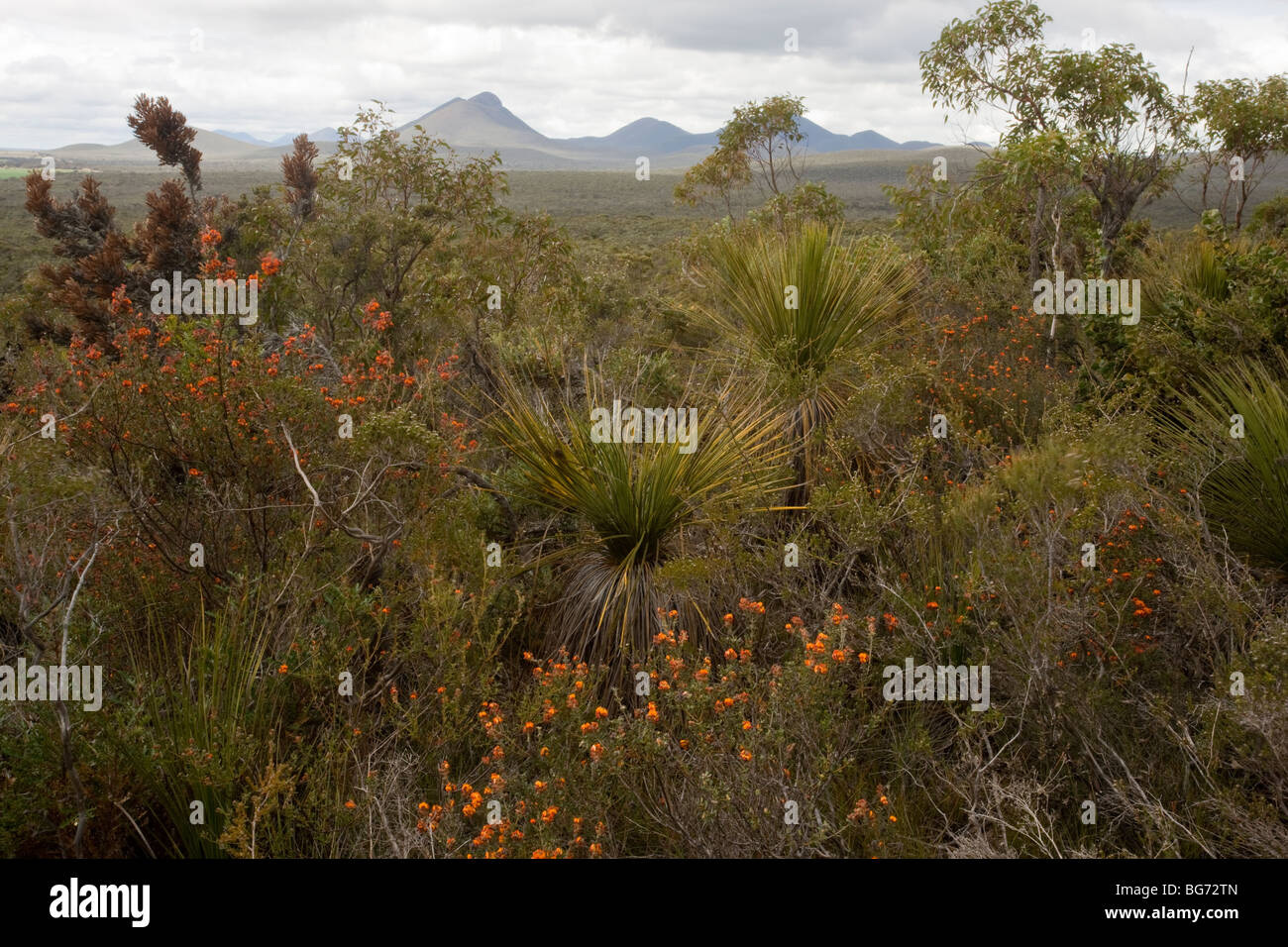 Stirling Ranges, near Mount Barker; view eastwards from Red Gum Pass in spring; south-west Australia - Stock Image
