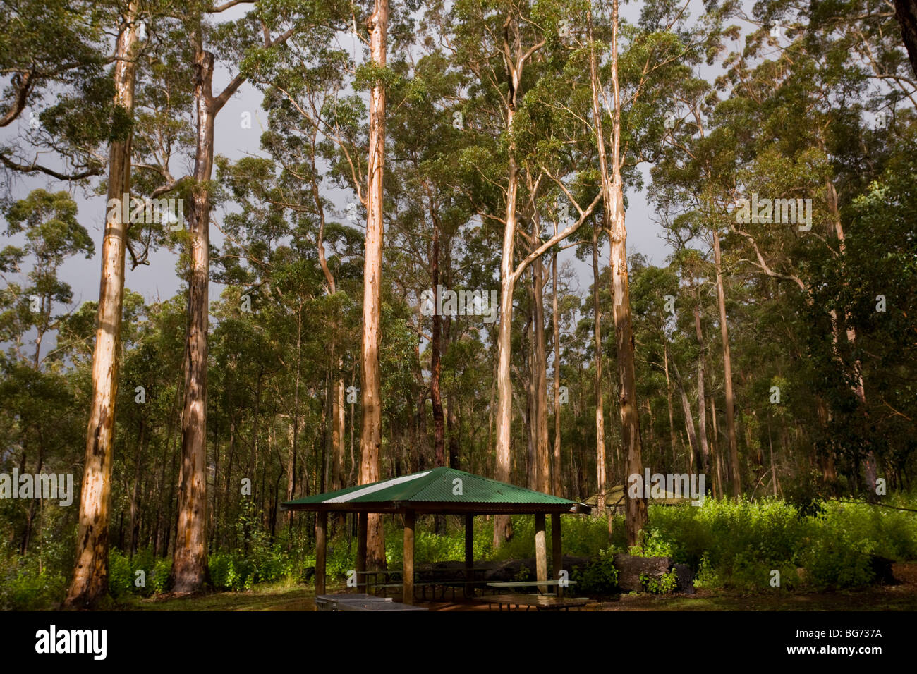 Car Park, barbeque shelter and karri Eucalyptus diversicolor forest, in the Porongurup Range, National Park, western - Stock Image