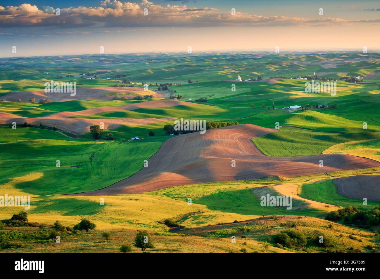 Farm fields surrounding Steptoe Butte in the eastern Washington Palouse area - Stock Image