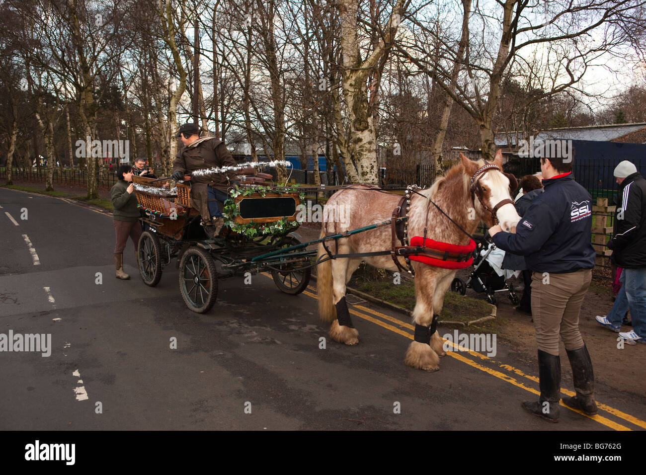 UK, England, Manchester, Wythenshawe Park festively decorated pony and trap giving Christmas rides - Stock Image