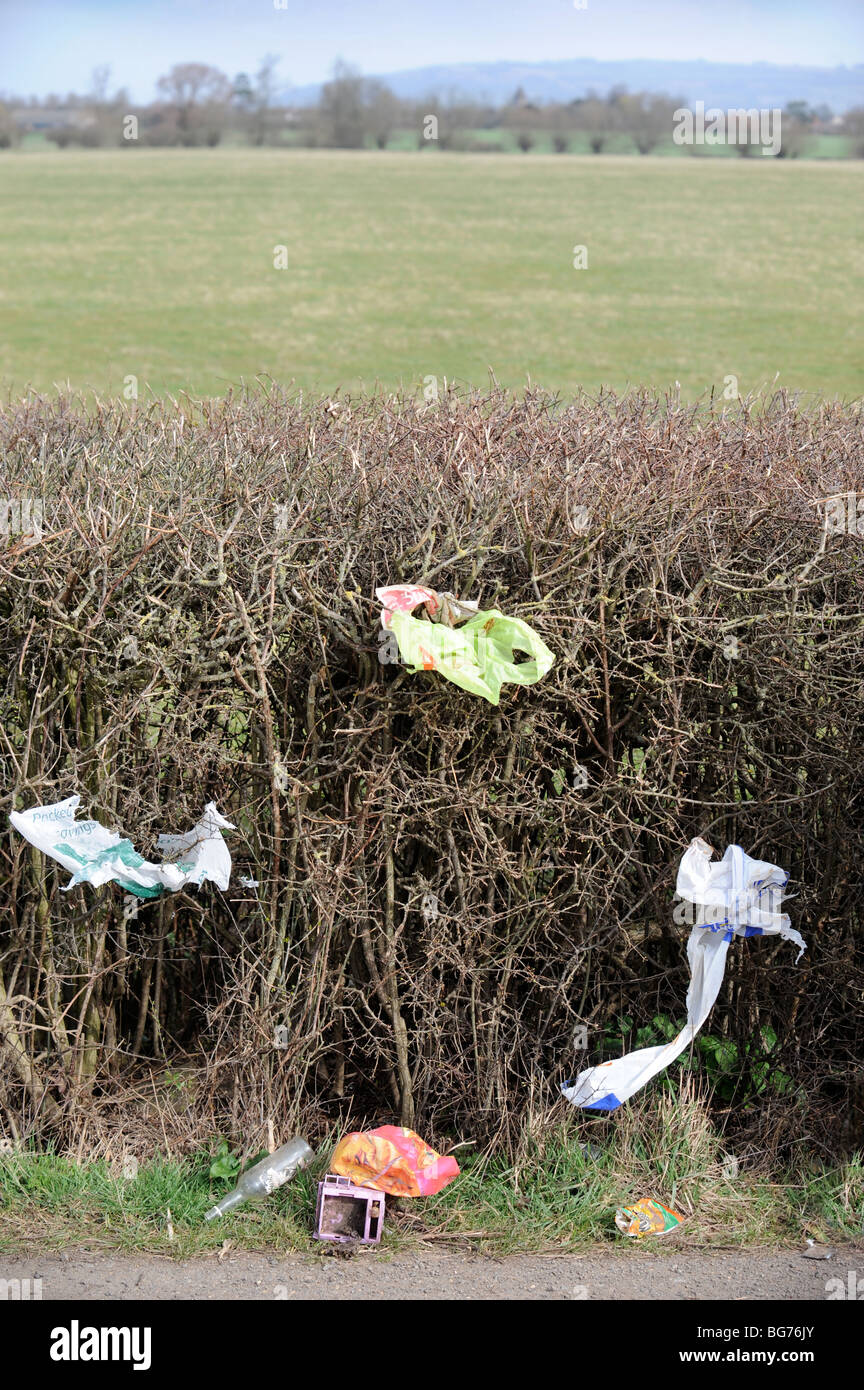 Litter stuck in a hedge on a country lane Gloucestershire UK - Stock Image