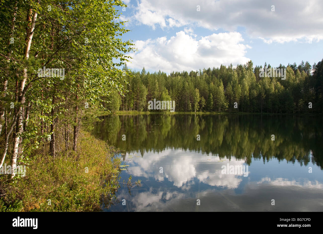 Small forest lake , Finland - Stock Image