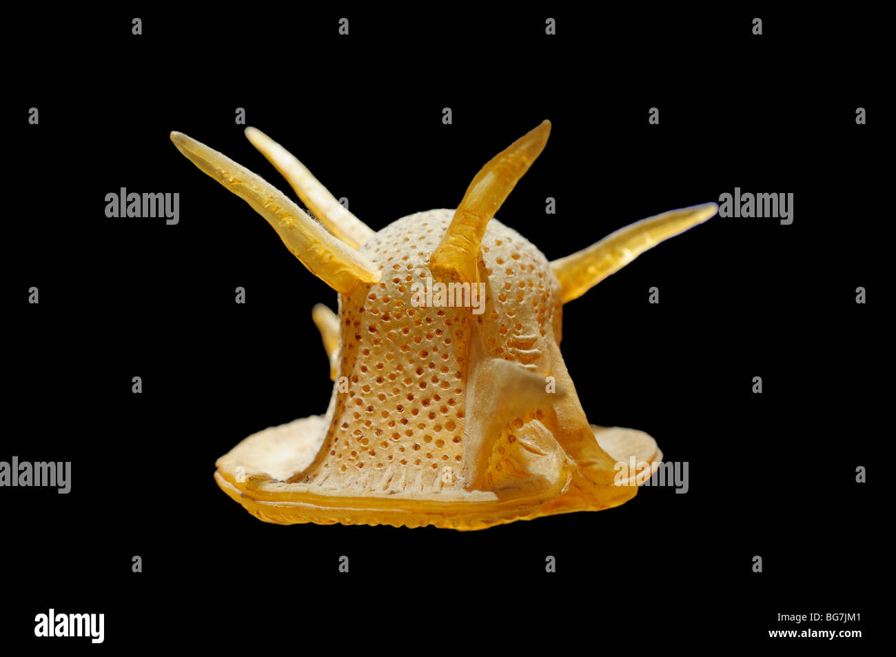 Dinoflagellate model, Ceratocorys horrida, magnified 1,000 times Stock Photo