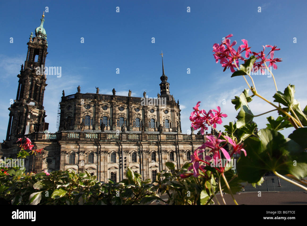 Germany, Saxony, Dresden, Old Town, Hofkirche, Kathedrale St. Trinitatis, St. Trinity Cathedral, Flowers in Foreground - Stock Image