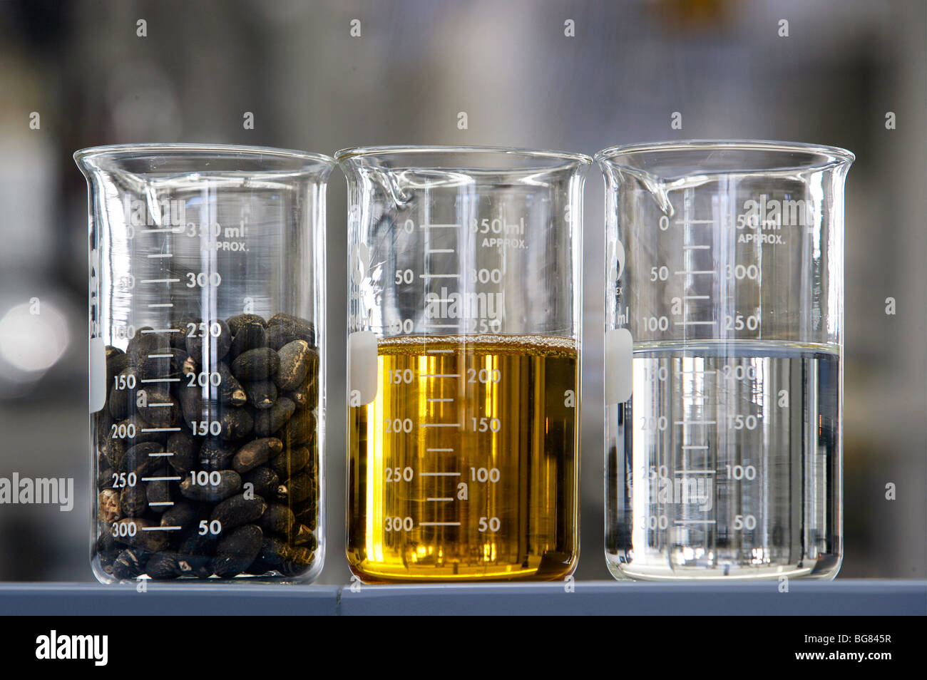 Production of bio-diesel in the BP research center in Bochum, Germany - Stock Image