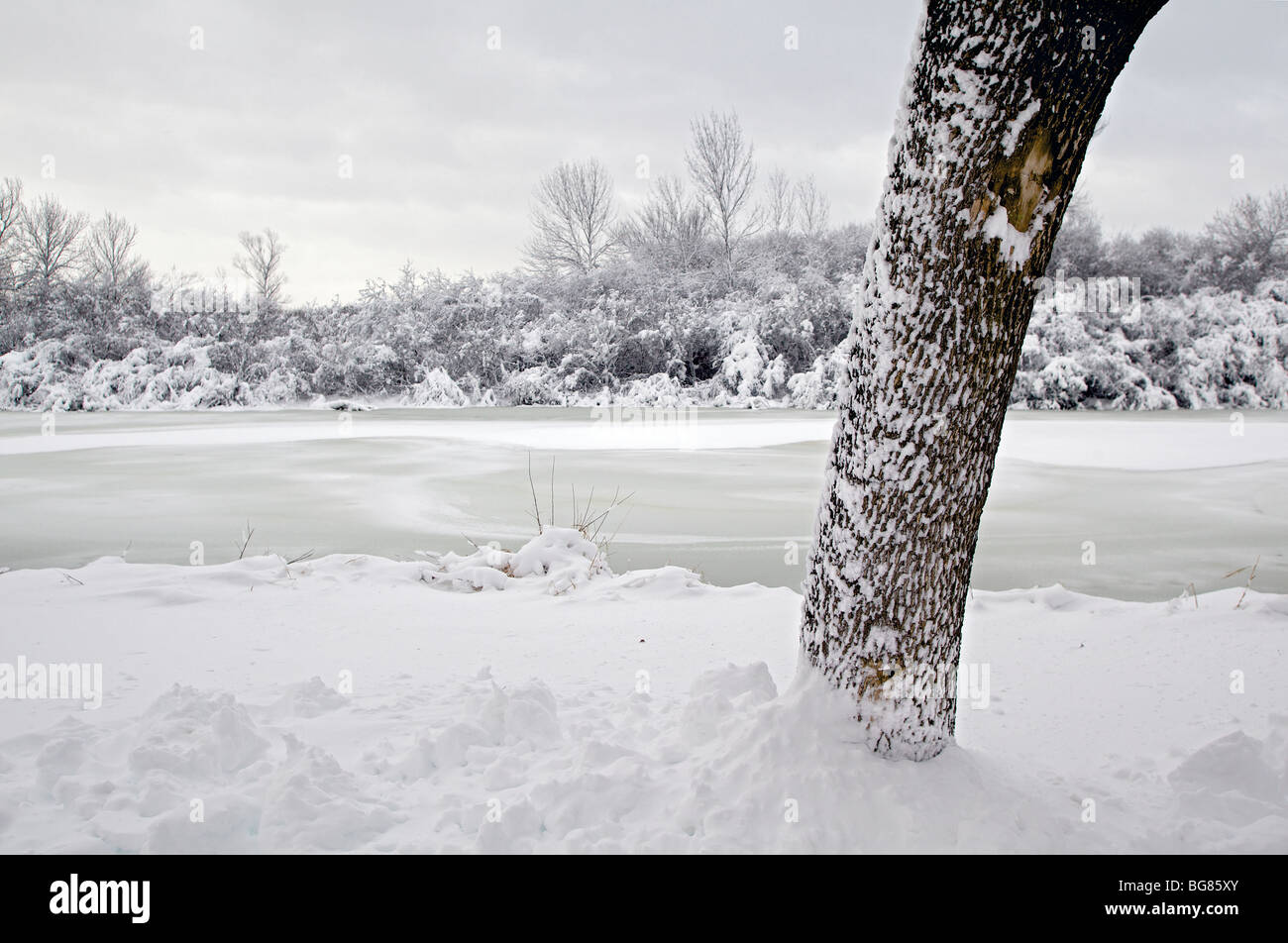 Heavy snow hangs on trees and bushes near Wingra Creek after 14-inches of snow blanked the Madison, Wisconsin Stock Photo