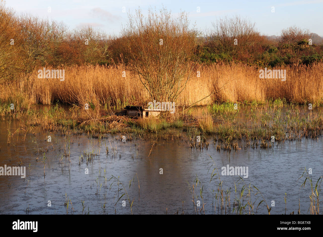 Otter Holt Welsh Wildlife and Wetland Centre Cilgerran Cardigan pembrokeshire Wales Cymru UK Stock Photo