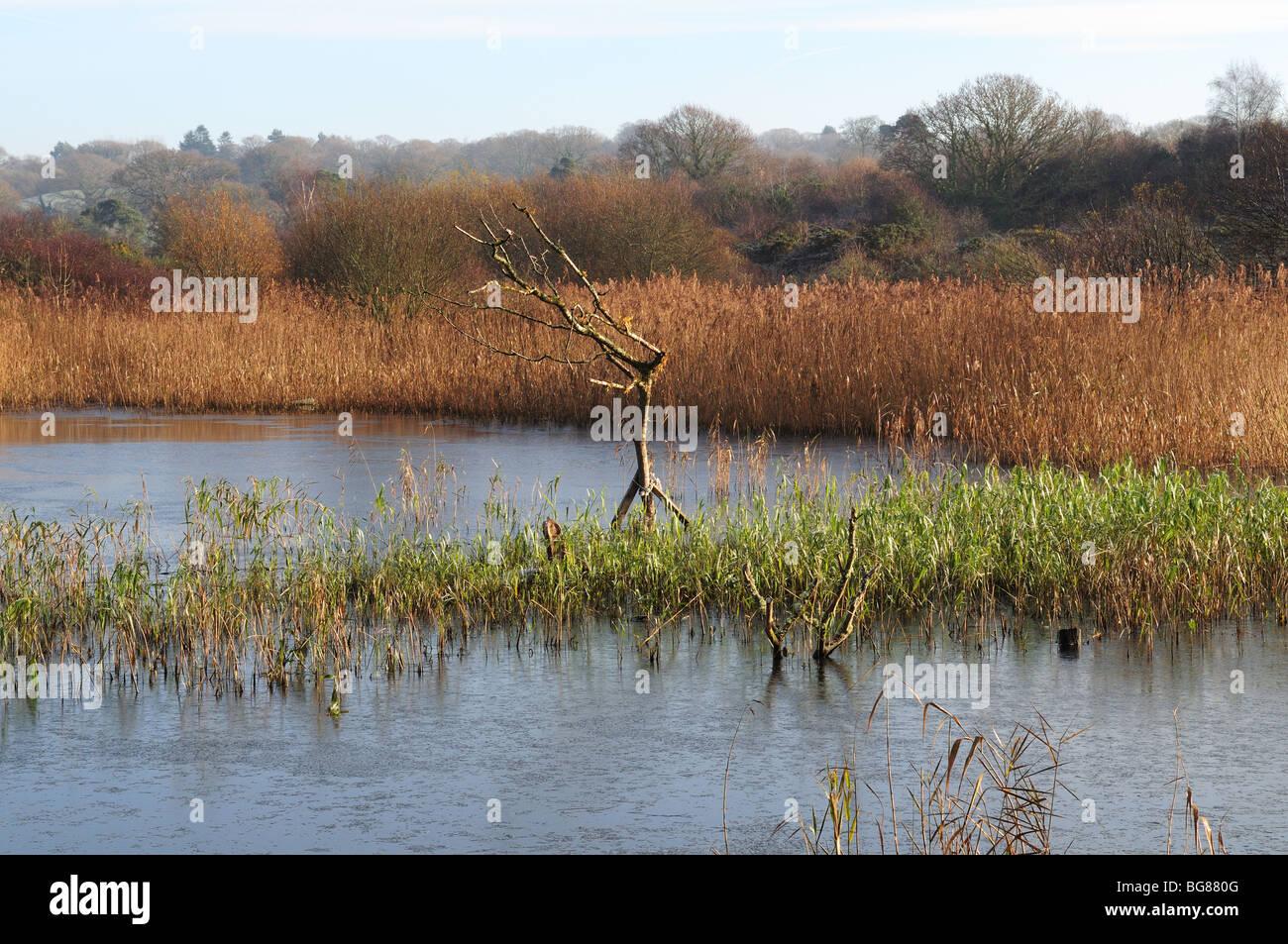 Welsh Wildlife and Wetlands Centre  Cilgerran Cardigan Pembrokeshire Wales Cymru UK Stock Photo