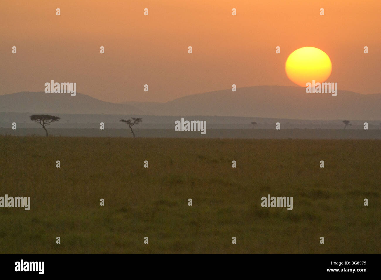 Sunrise over the savannah, Masai Mara, Kenya - Stock Image