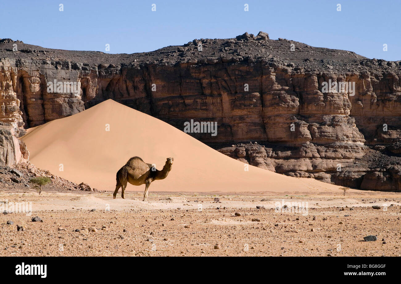 Algeria Landscape Plateau